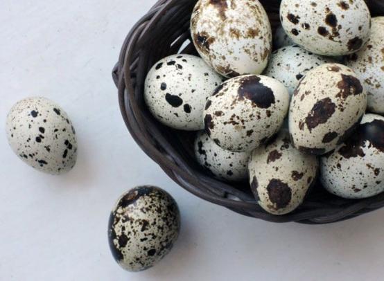 Польза и вред перепелиных яиц для мужчин