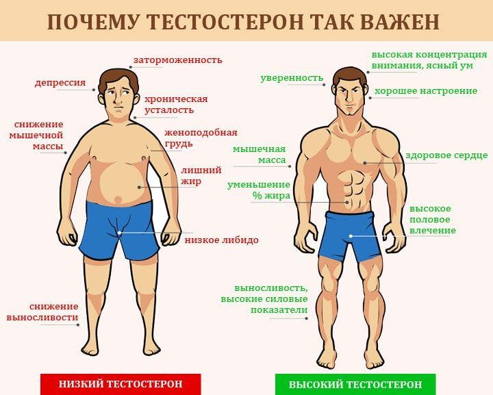 Продукты, повышающие тестостерон у мужчин. Что нужно есть для повышения тестостерона