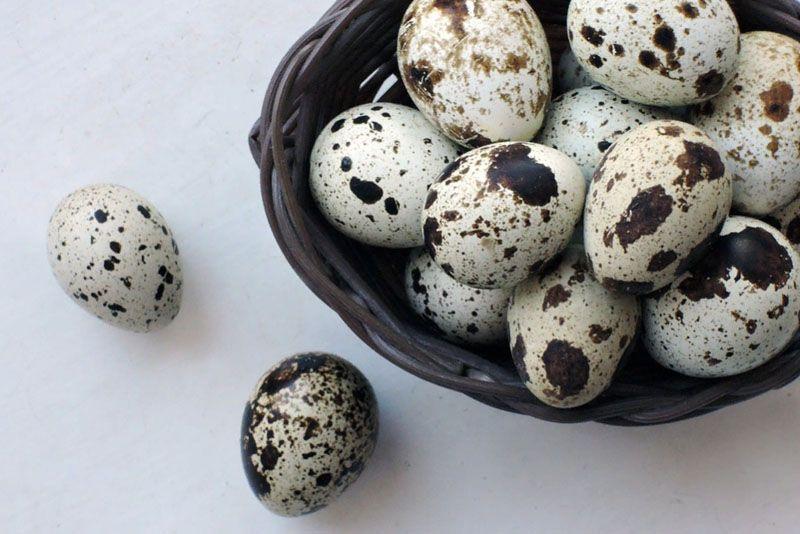 Как влияют перепелиные яйца на потенцию у мужчин